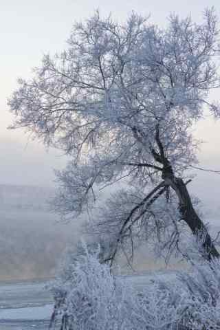 吉林雾凇风景手机壁纸