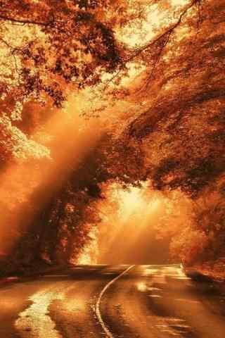 唯美秋日阳光下的树林手机壁纸