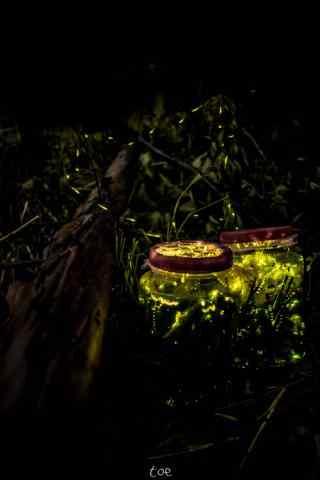 森林中的萤火虫唯美手机壁纸