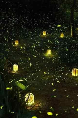 夏日森林中的萤火虫之路手机壁纸