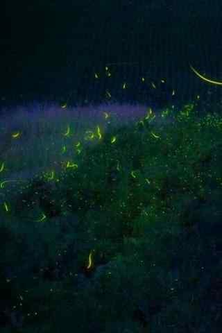 好看的夏日夜晚萤火虫手机壁纸