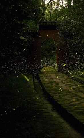 好看的夏日萤火虫手机壁纸
