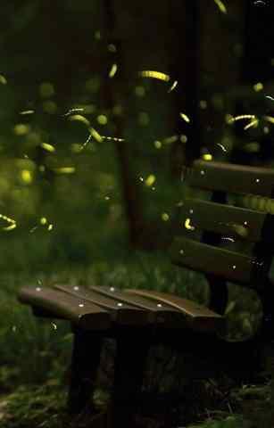 唯美森林中的萤火虫风景手机壁纸