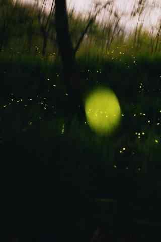 小清新森林中的萤火虫手机壁纸