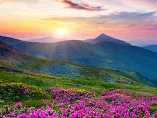 开满鲜花的山坡风景手机壁纸