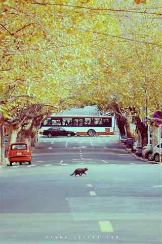美丽的青岛城市风景手机壁纸