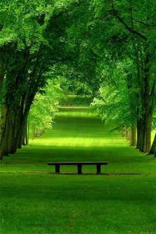 小清新綠色(se)森林手機壁紙