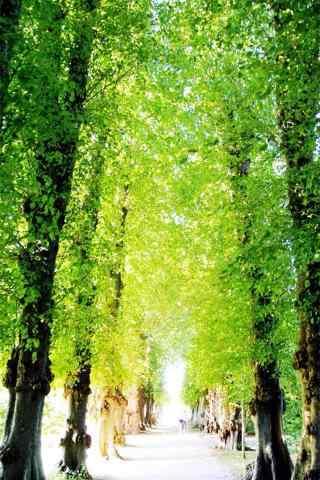綠色(se)森林小清新手機壁紙