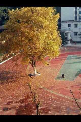 开学季之校园唯美风景手机壁纸