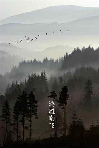 2017白露节气鸿雁南飞手机壁纸