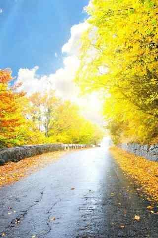 秋天唯美的森林风
