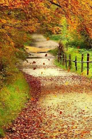 秋天树林风景唯美