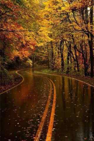 静谧的秋日森林手