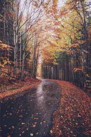 美丽的秋日森林手