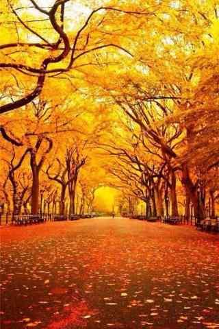 秋日风景手机图片