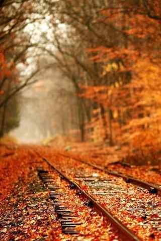 秋天森林风景唯美