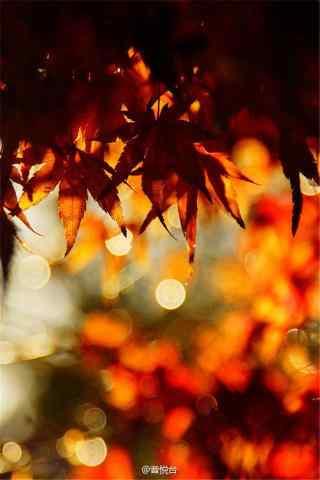 唯美秋日落叶风景