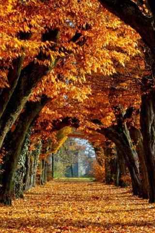 美丽的深秋公园风