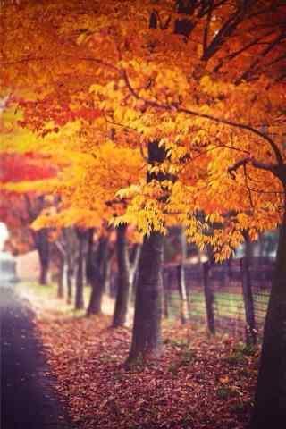 好看的秋日森林手