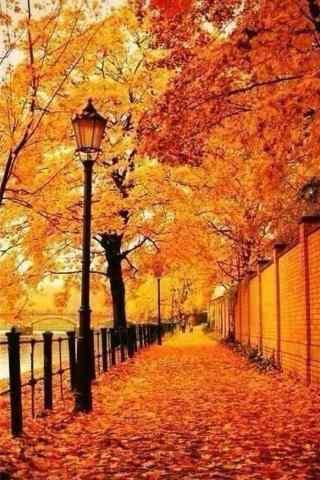 秋日美景图片手机
