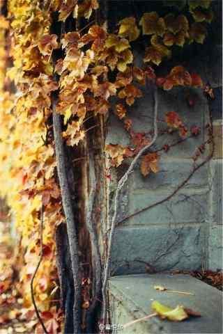 唯美的秋日风景手