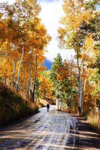 秋天(tian)的森林風景手(shou)機壁(bi)紙