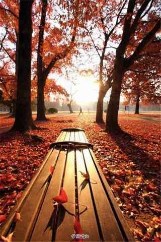 秋日公园落叶风景