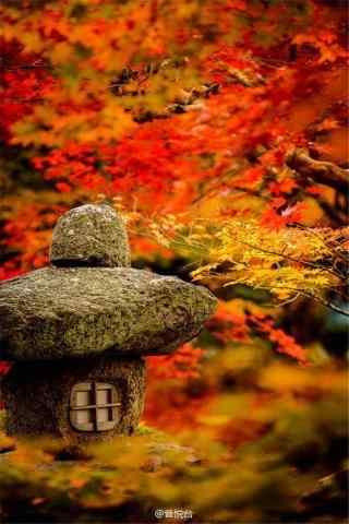 秋意超浓的秋日风