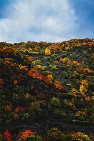 美丽的深秋风景手