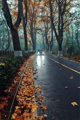 秋日森林落叶风景