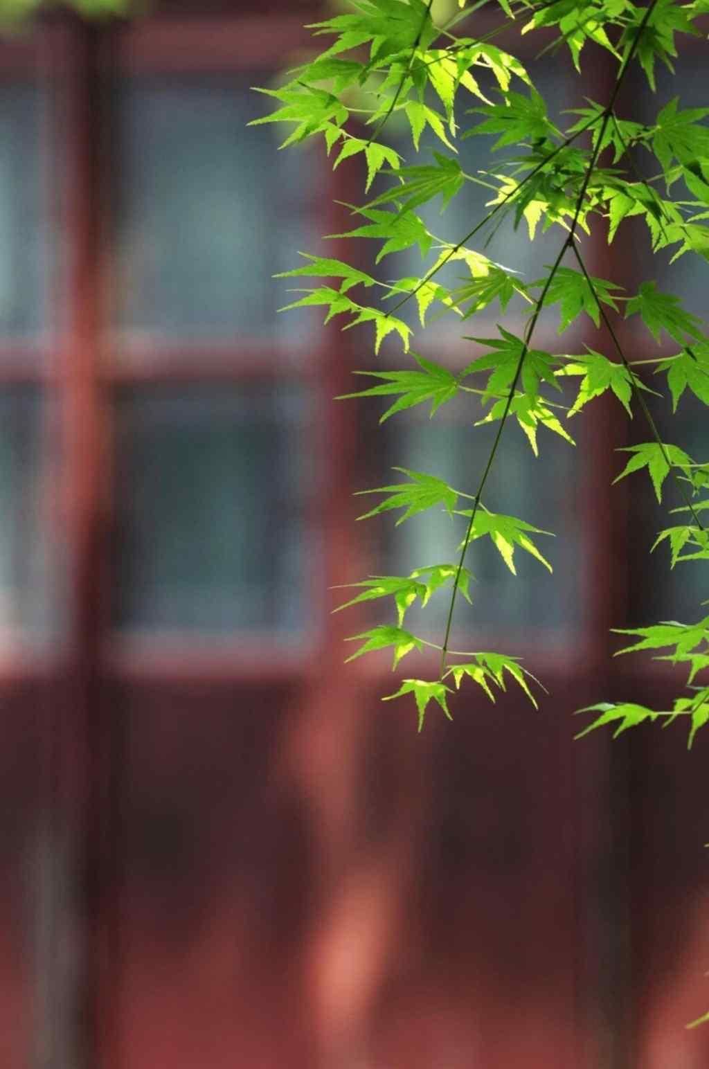 绿色清新护眼园林手机壁纸