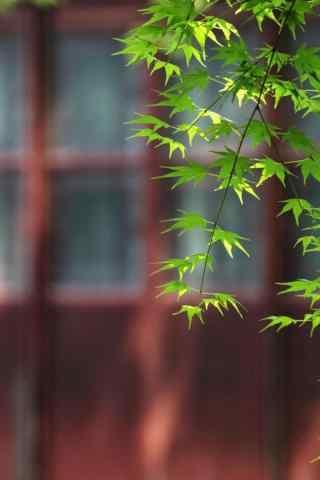 绿色清新护眼园林