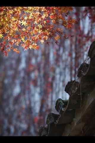 秋日风景唯美手机壁纸