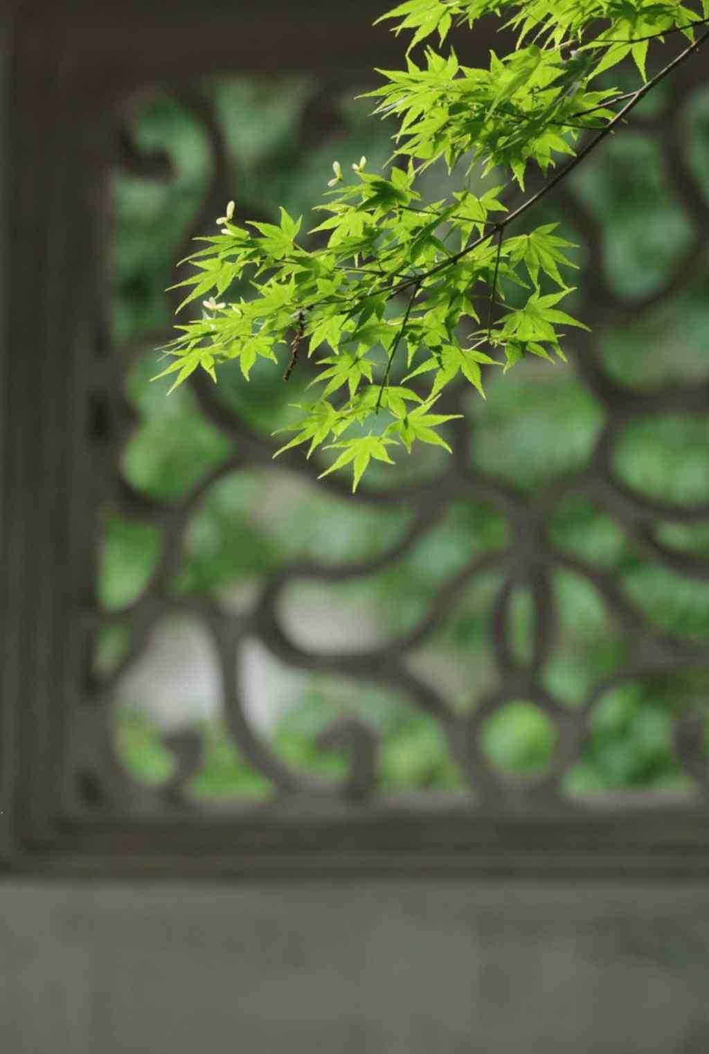 美丽的清新园林护眼手机壁纸
