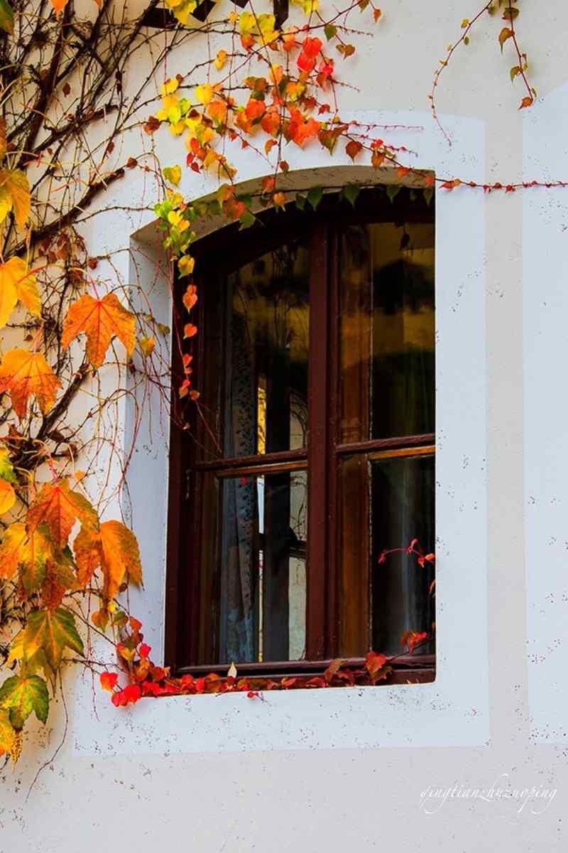 秋日的爬山虎唯美风景手机壁纸