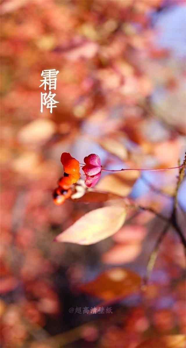 2017年霜降美丽的红叶风景手机壁纸