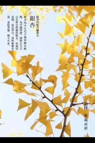 2017年霜降的黄叶手机壁纸