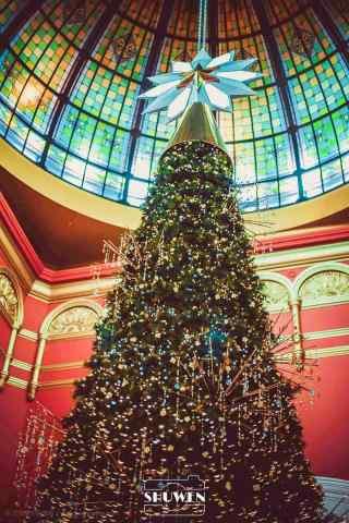 好看的圣诞树图片手机壁纸