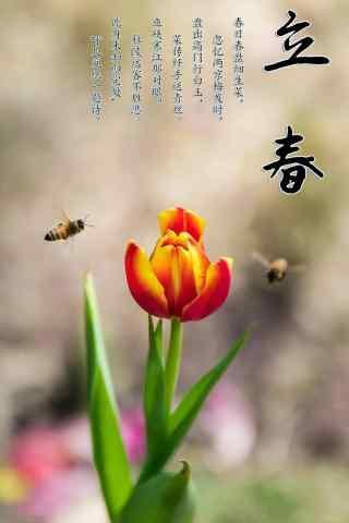 立春节气特色鲜花