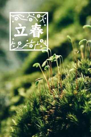 2017年立春节气之绿色嫩芽图片手机壁纸