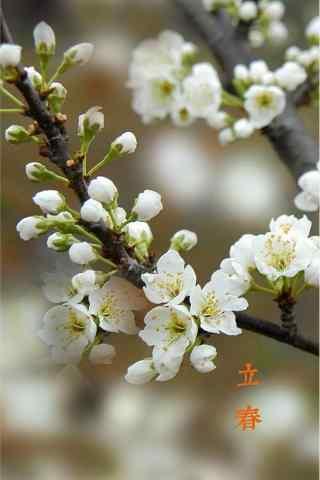 立春节气壁纸之白