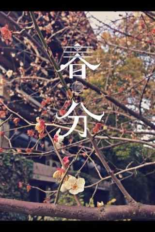 春分节气—春天花开满枝手机壁纸
