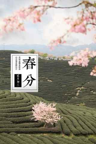 春分节气—春日里桃花开在茶田手机壁纸