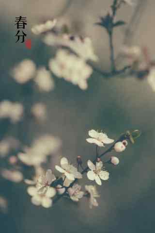 春分节气—春日里的桃花盛开手机壁纸
