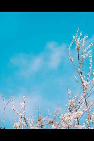 春分—小清新风景