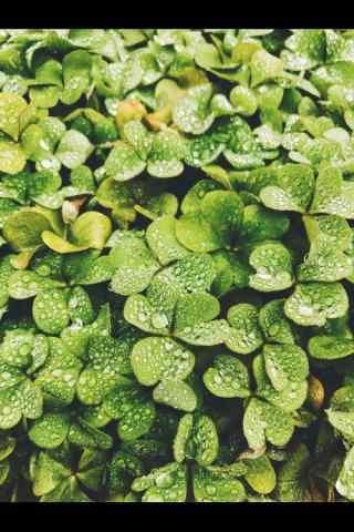 春分—清新绿色植