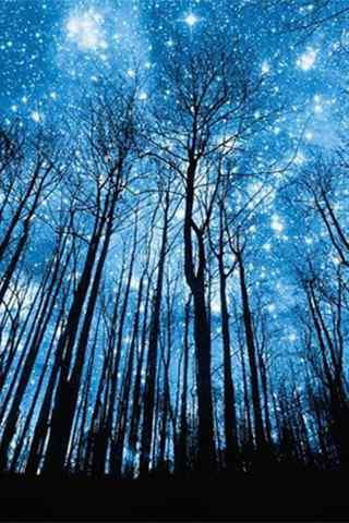 追逐繁星的孩子夜空下的深林手机壁纸