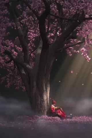 少年锦衣卫海棠树下的袁小棠手机壁纸