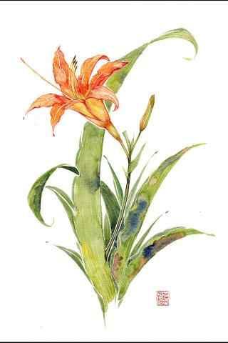 母亲节送花忘忧草手绘壁纸