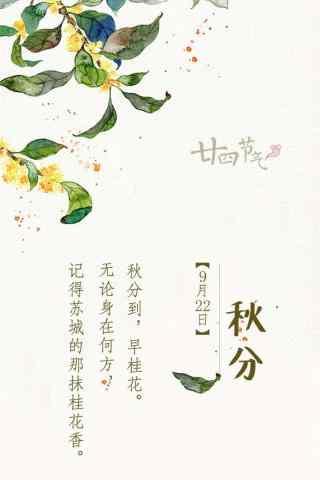 秋分节气手绘唯美桂花手机壁纸